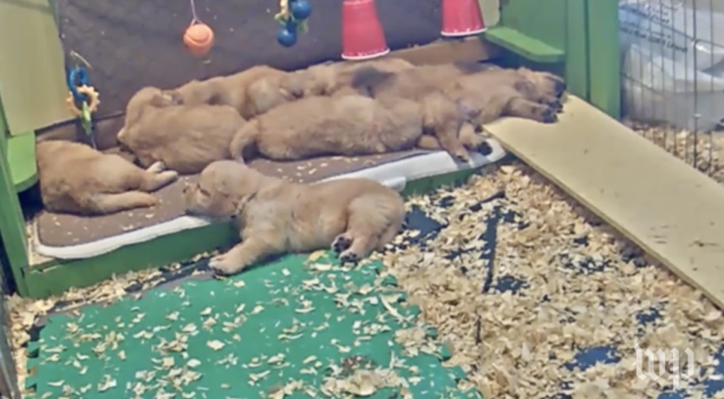 great example of content marketing puppies not politics video